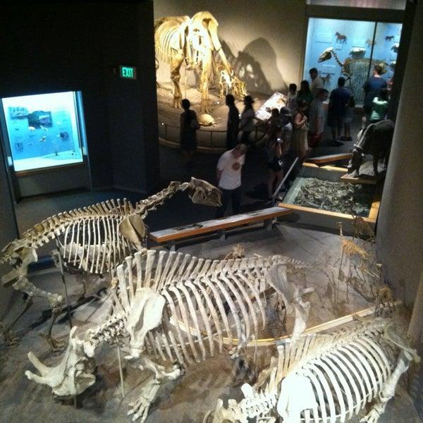 รูปภาพถ่ายที่ Denver Museum of Nature and Science โดย Gautham S. เมื่อ 7/21/2013