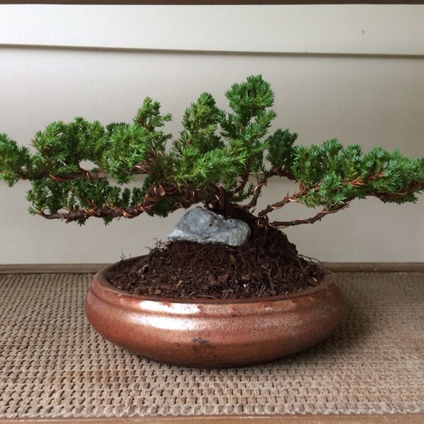 Painted Lady Bonsai Hobby Shop In Wilmington