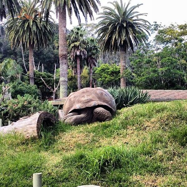 10/5/2013 tarihinde MauOscarziyaretçi tarafından Auckland Zoo'de çekilen fotoğraf