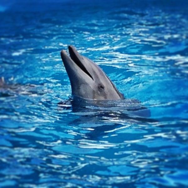 Foto scattata a Miami Seaquarium da Nara C. il 7/21/2013