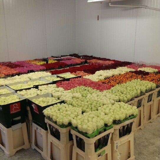 111, закупка цветов оптом киевская обл