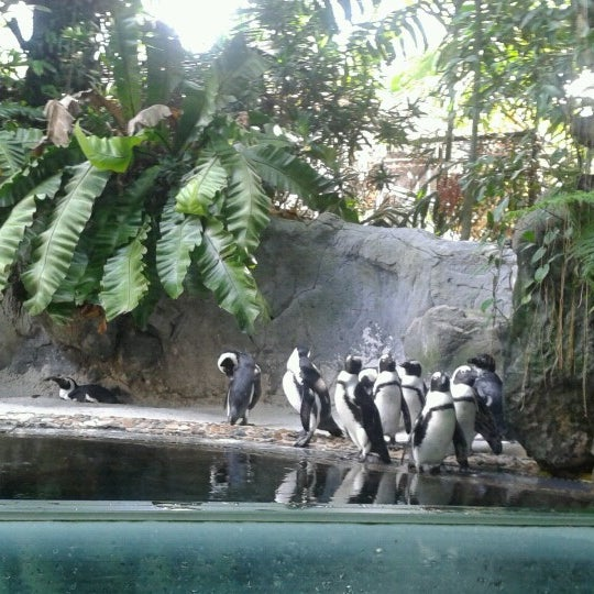 Foto tirada no(a) Singapore Zoo por Laila em 12/26/2012