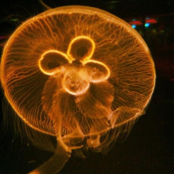 2/12/2013에 john k.님이 SEA LIFE Minnesota Aquarium에서 찍은 사진