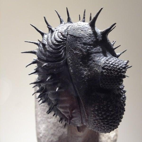Foto scattata a Houston Museum of Natural Science da Aneel N. il 3/31/2013