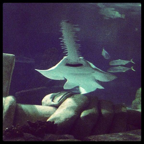 5/31/2013에 Mandy M.님이 SEA LIFE Minnesota Aquarium에서 찍은 사진