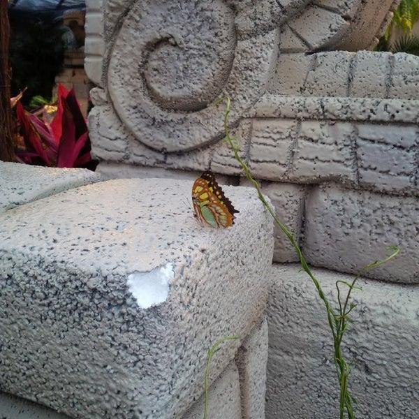 Photos At Centre Jardin Hamel Quebec Qc