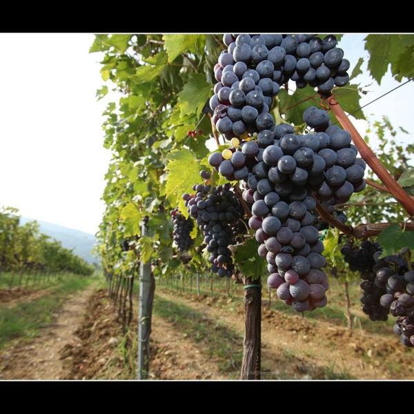 Foto diambil di Fattoria di Poggiopiano oleh Fattoria di Poggiopiano pada 9/20/2013