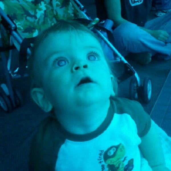 11/23/2012にRob N.がTexas State Aquariumで撮った写真