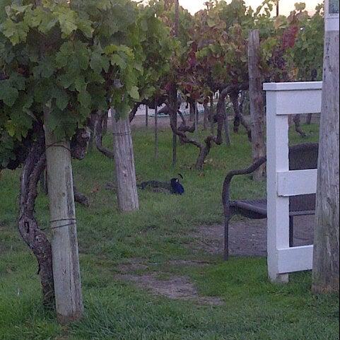 Das Foto wurde bei Kelsey See Canyon Vineyards von Jonnagirl am 8/31/2013 aufgenommen