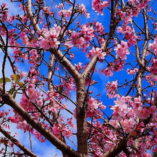 3/23/2013にMark P.がJapanese Friendship Gardenで撮った写真