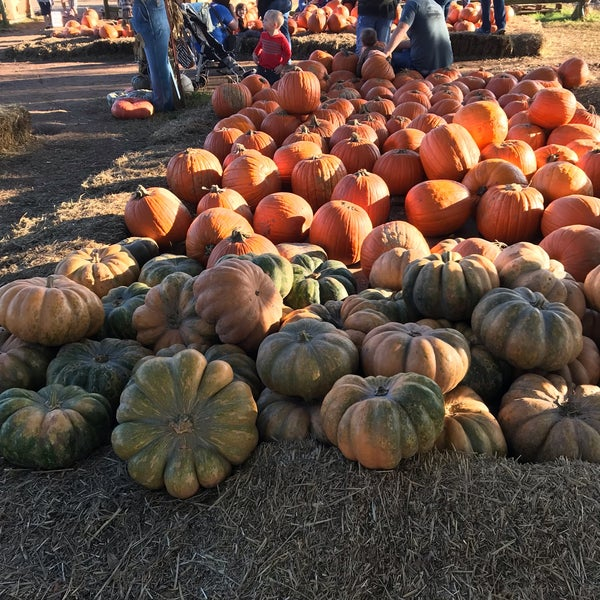 how do you say pumpkin patch in spanish