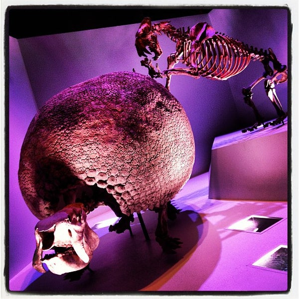 Foto scattata a Houston Museum of Natural Science da LuisGyG il 10/13/2012