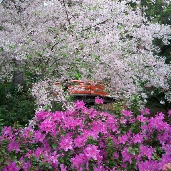 3/4/2014 tarihinde Descanso Gardensziyaretçi tarafından Descanso Gardens'de çekilen fotoğraf