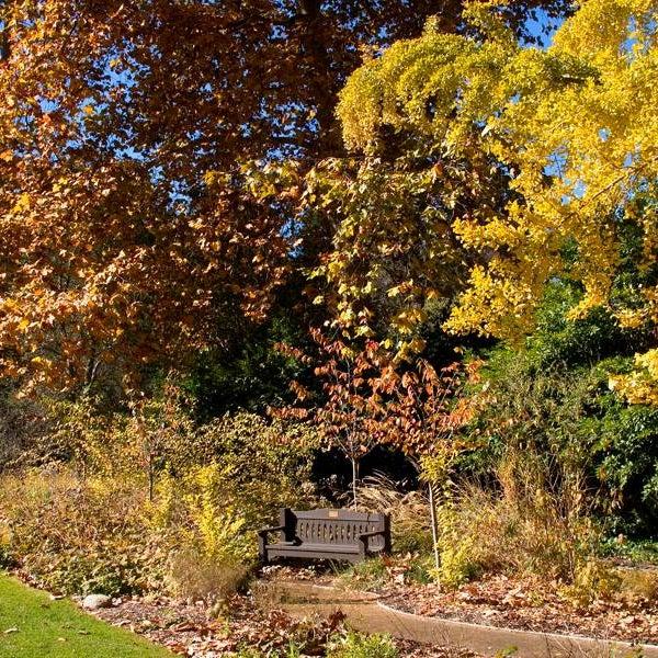 11/14/2013 tarihinde Descanso Gardensziyaretçi tarafından Descanso Gardens'de çekilen fotoğraf
