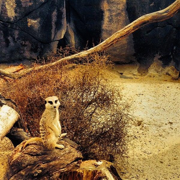 11/5/2013 tarihinde Octavio L.ziyaretçi tarafından Auckland Zoo'de çekilen fotoğraf