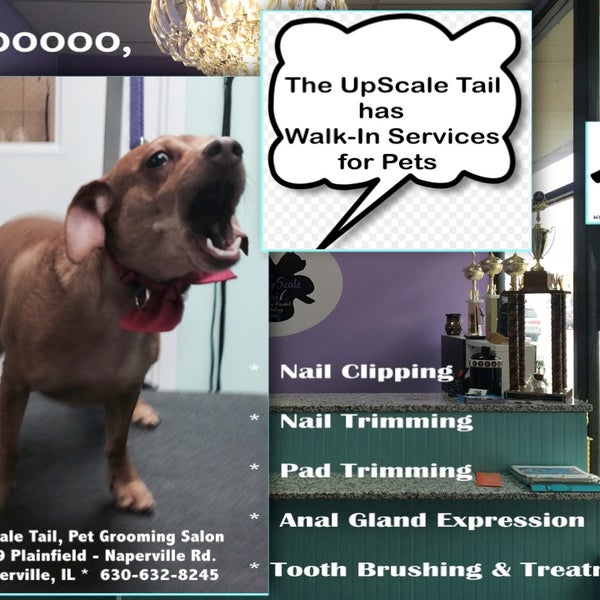 Photos at The UpScale Tail, Pet Grooming & Wellness Salon