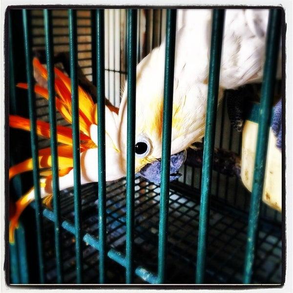 Stewart S Bird Farm Harleysville Pa