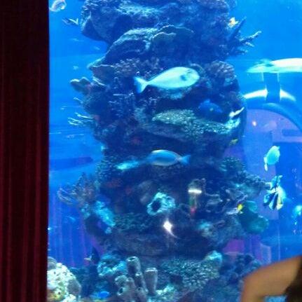 3/17/2012 tarihinde cary s.ziyaretçi tarafından Toshi's Living Room'de çekilen fotoğraf