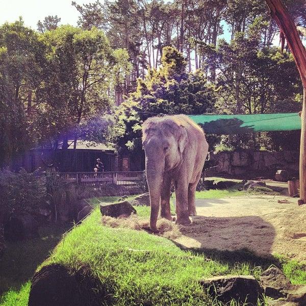 4/24/2013 tarihinde Russell James S.ziyaretçi tarafından Auckland Zoo'de çekilen fotoğraf