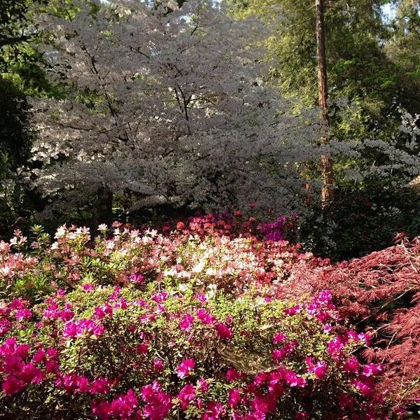 3/28/2013 tarihinde Donato C.ziyaretçi tarafından Descanso Gardens'de çekilen fotoğraf