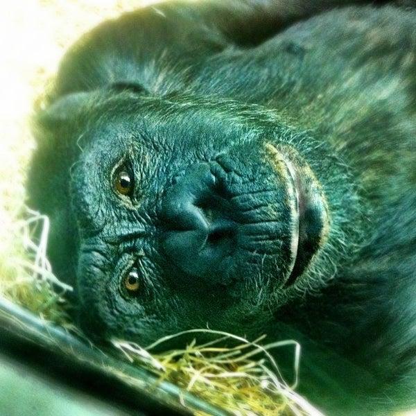 12/24/2012에 Diego G.님이 Zoologischer Garten Berlin에서 찍은 사진
