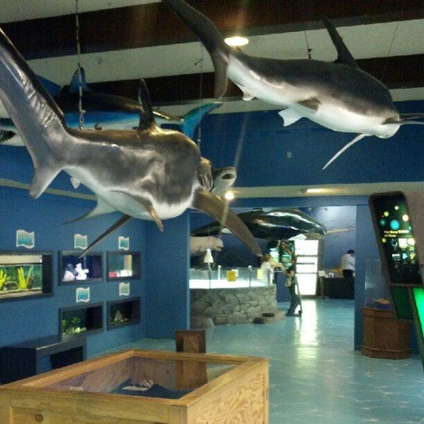 Foto tirada no(a) Las Vegas Natural History Museum por Yolanda A. em 9/27/2012