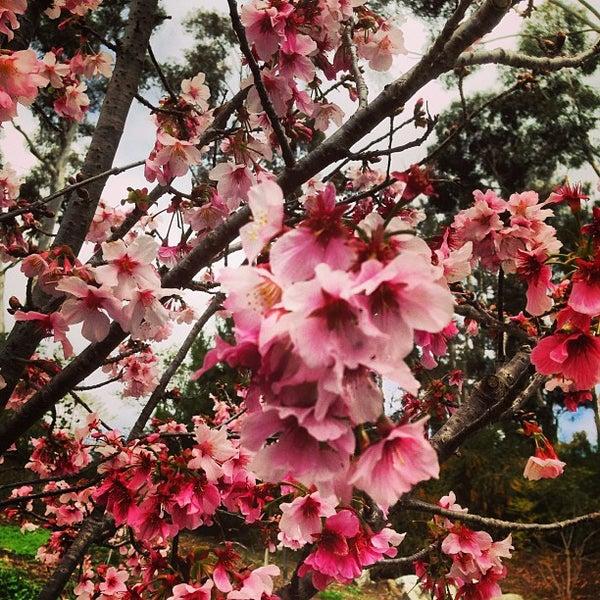 3/9/2013にMarty A.がJapanese Friendship Gardenで撮った写真