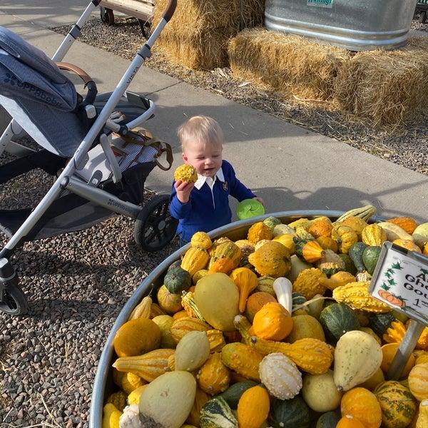 Foto tirada no(a) Nick's Garden Center & Farm Market por Brien em 10/24/2020