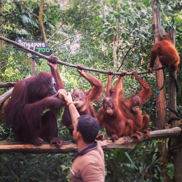 Foto tirada no(a) Singapore Zoo por Phyllis P. em 7/4/2013