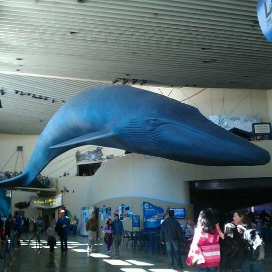 Das Foto wurde bei Aquarium of the Pacific von Nao M. am 4/1/2012 aufgenommen