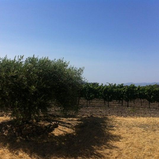 Das Foto wurde bei Gloria Ferrer Caves & Vineyards von Steph M. am 7/14/2012 aufgenommen