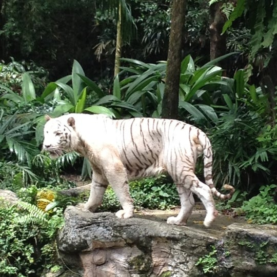 Foto tirada no(a) Singapore Zoo por Mickey S. em 5/5/2012
