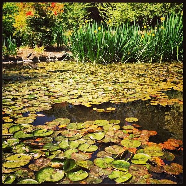 4/20/2013 tarihinde Rion Z.ziyaretçi tarafından Descanso Gardens'de çekilen fotoğraf