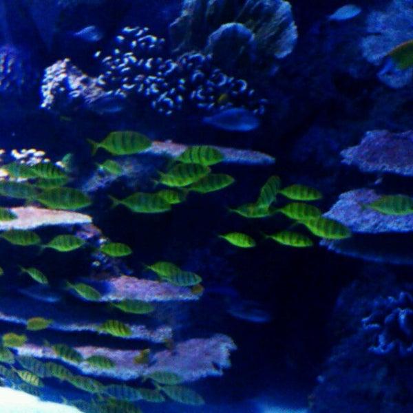 Das Foto wurde bei Antalya Aquarium von Miloslava C. am 5/1/2013 aufgenommen