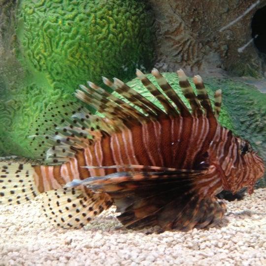 10/16/2012에 Joe S.님이 SEA LIFE Minnesota Aquarium에서 찍은 사진