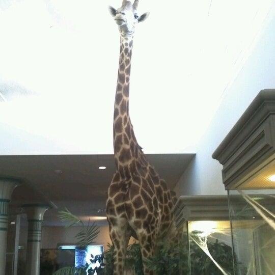 Foto tirada no(a) Las Vegas Natural History Museum por Belinda T. em 10/30/2012
