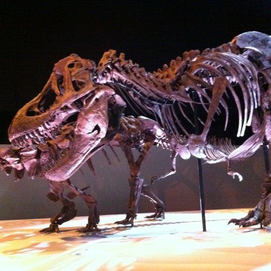 Foto scattata a Houston Museum of Natural Science da Karin H. il 11/15/2012