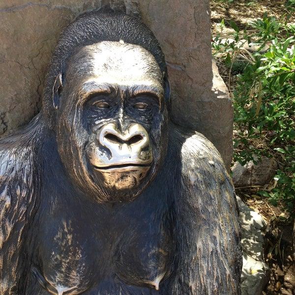 Снимок сделан в Phoenix Zoo пользователем Diane P. 4/13/2013