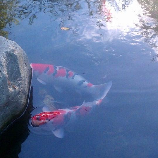 11/17/2012にDaveがJapanese Friendship Gardenで撮った写真