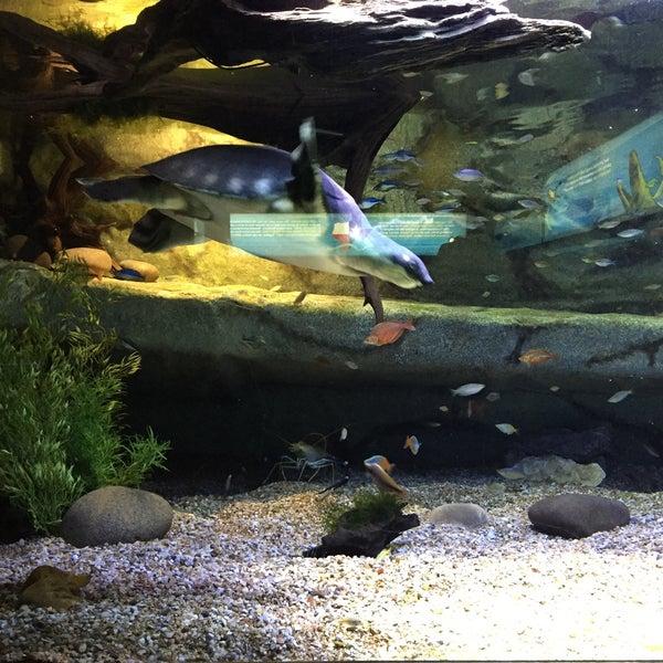 Richard Friedrich Aquarium At The San Antonio Zoo - Uptown ...