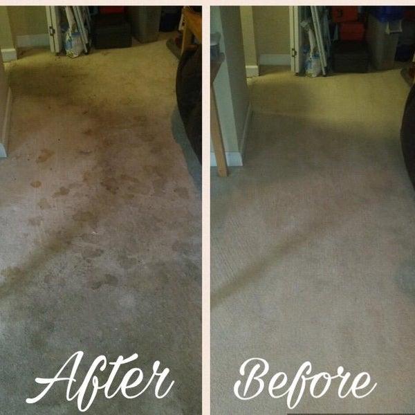 Pro Steam Carpet Care Carpet Vidalondon