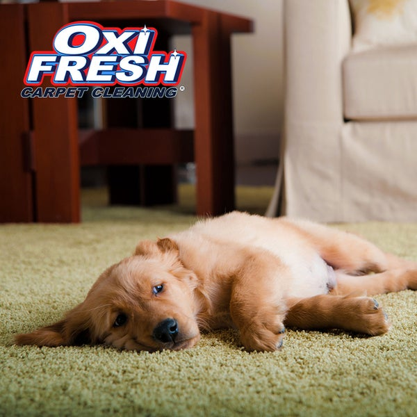 Oxi Fresh Carpet Cleaning North Village Columbia Mo