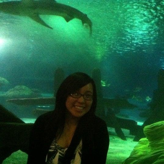 5/3/2012에 Vivian M.님이 SEA LIFE Minnesota Aquarium에서 찍은 사진