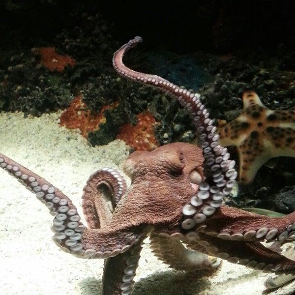 6/21/2013에 Anne N.님이 SEA LIFE Minnesota Aquarium에서 찍은 사진
