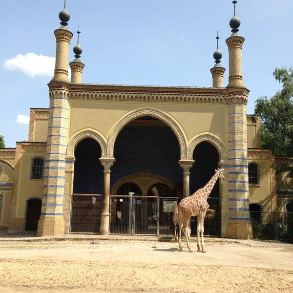 7/13/2013에 Leo L.님이 Zoologischer Garten Berlin에서 찍은 사진