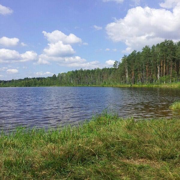 погрузчик ковшовый красное озеро в лесу фото где есть почти