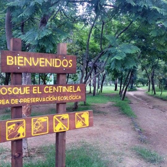 Image result for bosque del centinela