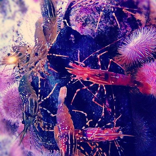 Das Foto wurde bei Aquarium of the Pacific von Jansen G. am 11/13/2012 aufgenommen