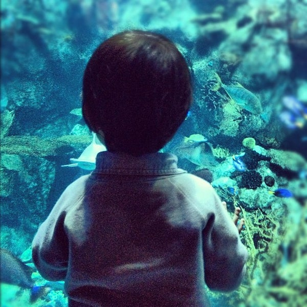 Foto tomada en Aquarium of the Pacific  por Jansen G. el 11/13/2012