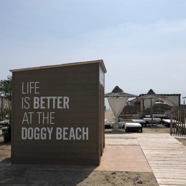 Doggy Beach Lignano